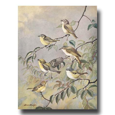 printable wall art birds bird art prints