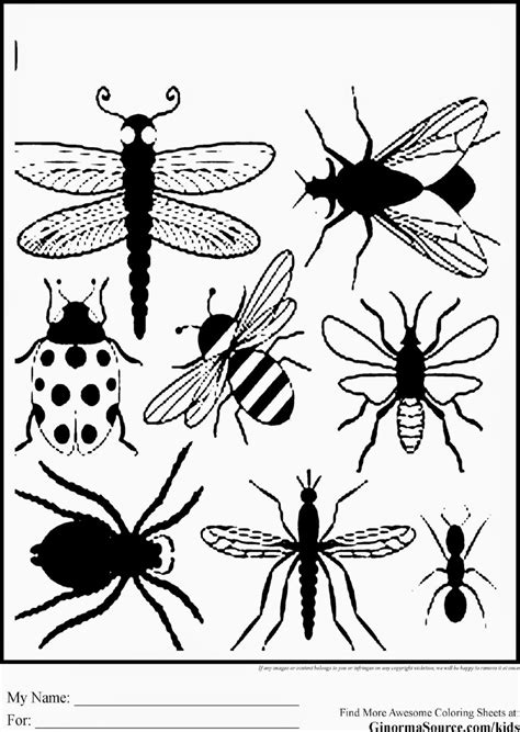 bugs coloring pages pdf insects free colouring pages