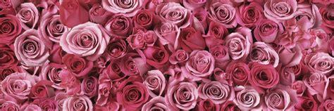 floral wallpaper vintage rose hd desktop wallpapers  hd