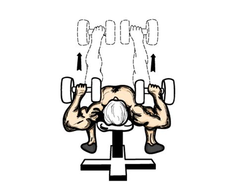 flat dumbell bench press dumbbell exercise illustrations to help you with your