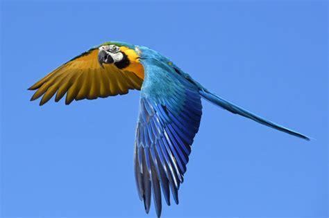 animals that start with u list of amazing animals animals that start with p list of amazing animals