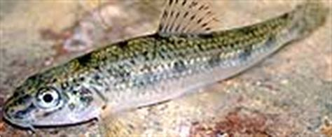 wann beißen welche fische fische einsetzen ab wann hobby gartenteich