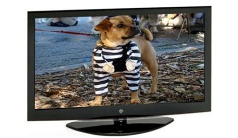 can dogs tv can dogs see what s on the television screen spoodle website