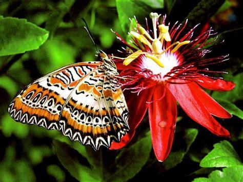 imagenes mariposas jpg las mejores fotos de mariposas im 225 genes de mariposas