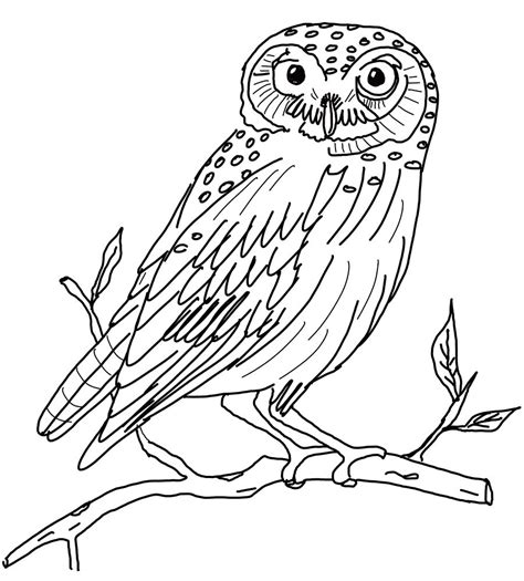 owl coloring pages snowy owl coloring pages kids