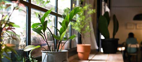 house plants stratford garden centre