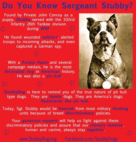 Sgt Stubby Facts 17 Best Images About Pit Bulls On American Pit Therapy Dogs And Pit Bull Terriers