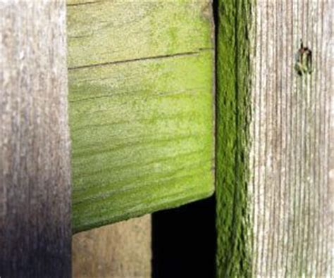 how to remove mildew from wood cabinets how to remove mold and mildew from wood this will come