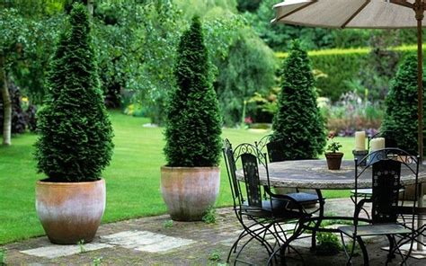 How To Decorate With Trees Gardens Receptions And Decks Potted Trees For Patio