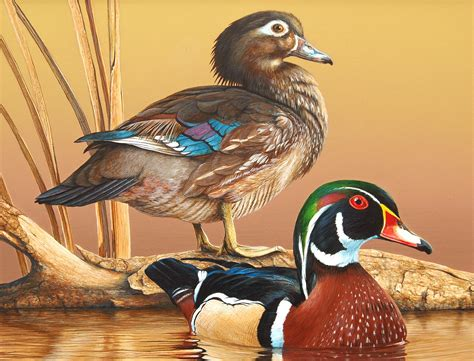 watercolor wood duck by manicmagician on deviantart duck paintings wood ducks chosen for alabama waterfowl