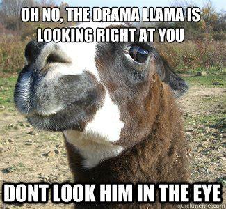Drama Llama Meme - oh no the drama llama is looking right at you dont look