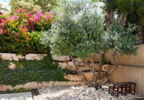 Mediterraner Garten Winterhart