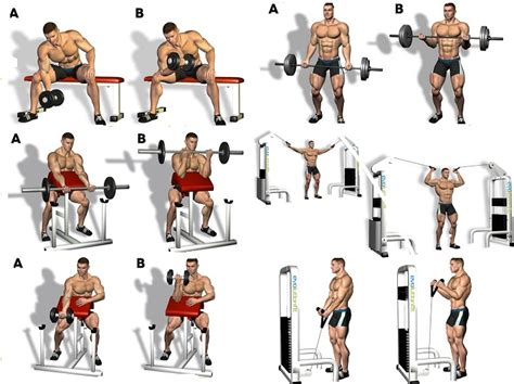 Chest Exercises With Dumbbells Without Bench Bicep Workout Program To Guarantee The Biggest Biceps