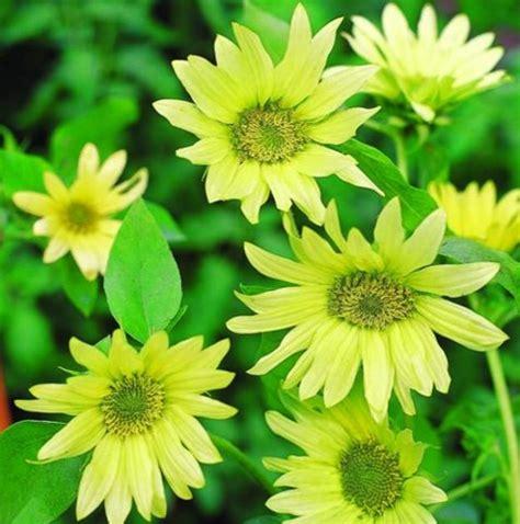 annual garden flowers annual flowers and plants garden design