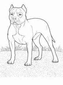 pitbull coloring pages pitbull drawings coloring pages