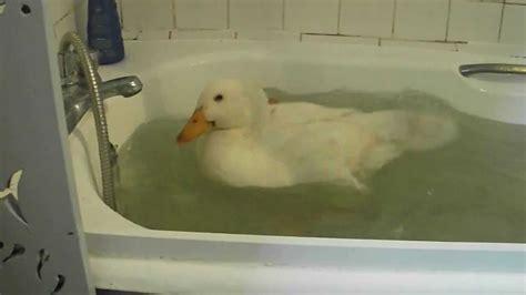 bathtub duck pet duck swimming in my bath tub youtube