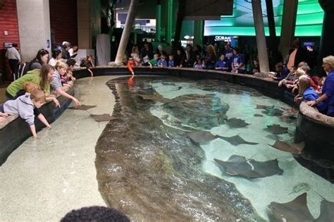 Atlanta Home Decor by Stingray Touch Tank Picture Of Georgia Aquarium Atlanta
