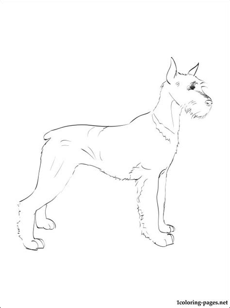 schnauzer coloring page coloring pages