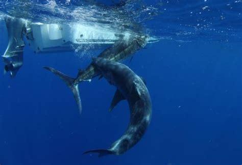 mako vs sea hunt boats boy mako shark thinglink