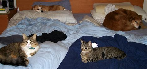 animal in bed wordless wednesday animals outdoors and pieleah s