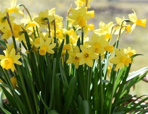 Pflanzen Im März by Schneegl 246 Ckchen Giftig Das Schneegl Ckchen Ist Giftig