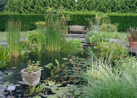 Aquatic Gardens by Bellewood Gardens Diary