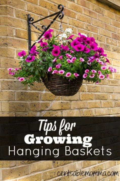 Hanging Flower Basket 25 best ideas about hanging flower baskets on