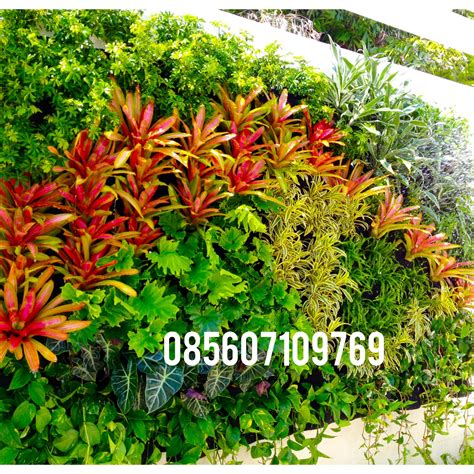 cara membuat taman vertikal garden gambar taman vertikal garden vertikal garden desain