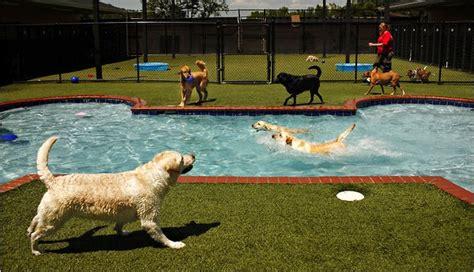 layout de hotel para cachorro vale a pena montar um hotel para cachorro no seu pet shop