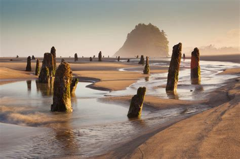 unusual travel destinations visit this ghost forest