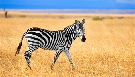 Search Kenya Kenya Travel Guide And Travel Information World Travel Guide