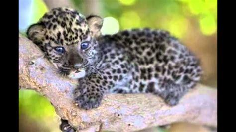 imagenes de animales lindos los diez animales bebes mas lindos del mundo youtube