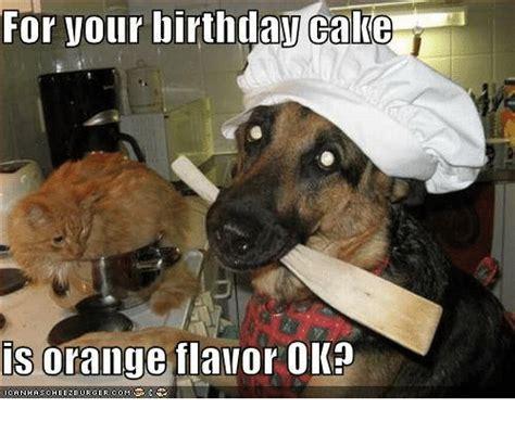 Birthday Cake Dog Meme - 20 happy birthday husband memes of all time sayingimages com