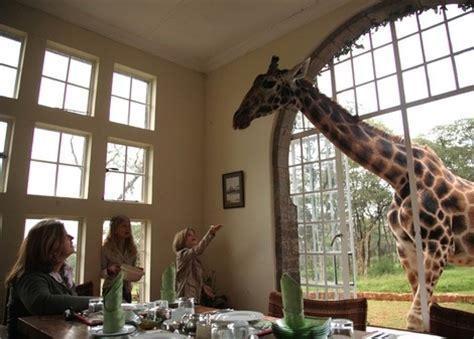 giraffe manor boutique hotel in nairobi via gamewatchers