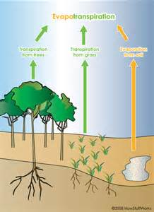 Trees and our climate how do trees affect the weather