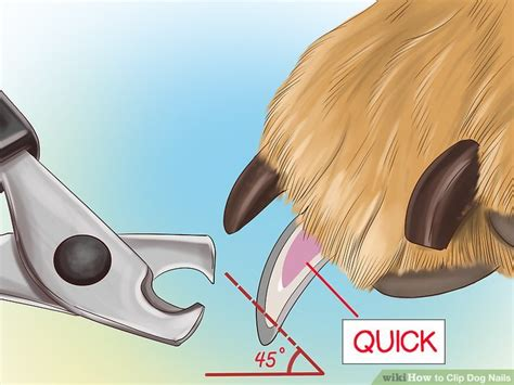 how to clip nails that are black veterinarian approved advice on how to clip nails autos post