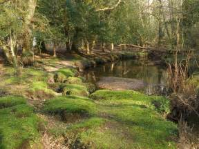 Mossy Green file mossy bank on the beaulieu river new forest