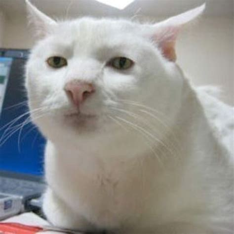 Crying Cat Meme - serious cat know your meme