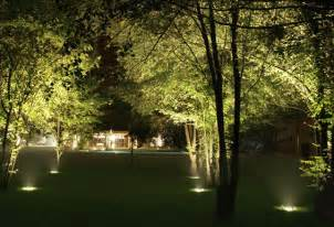 light up trees 1000 images about landscape lighting on
