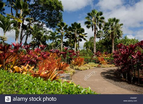 patio dole the plantation garden tour at the dole plantation in