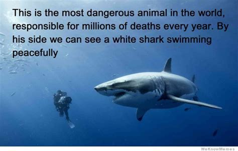 most dangerous in the world the most dangerous animal in the world memes