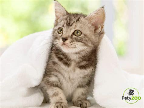 minicuentos de gatos y gatos informaci 243 n importante y todo sobre sus cuidados b 225 sicos