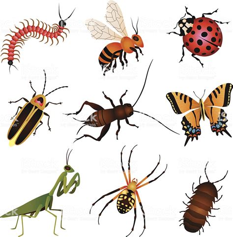Garden Insects And Creatures Stock Vector Art & More ... Insect Drawings Clip Art