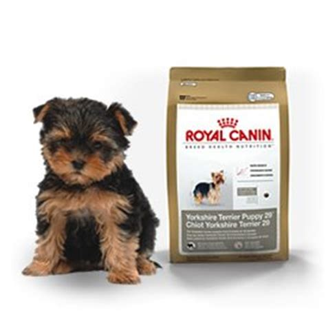 royal canin for yorkies royal canin terrier puppy grocery gourmet food