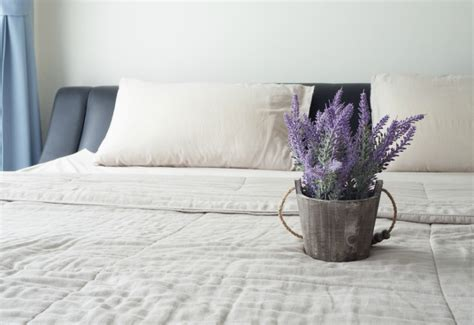 plants to have in bedroom 5 bedroom plants to help you sleep better the sleep matters club