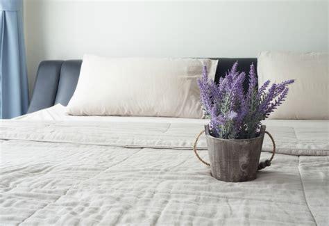 Increase Bedroom Humidity 5 Bedroom Plants To Help You Sleep Better The Sleep