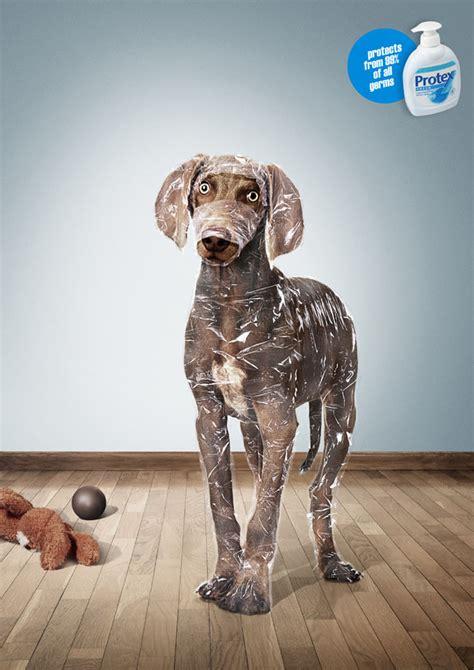 puppy ads protex ads 0
