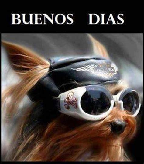 Imagenes Buenos Dias Rockeros | perrito rockero te desea buenos d 237 as a photo on flickriver