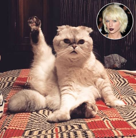 taylor swift cat top taylor swift s cat olivia is adorably preparing for her