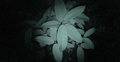 info wisata kopeng tanaman hias kopeng